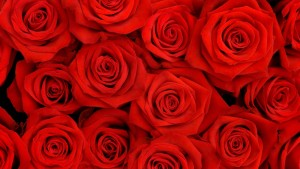 roses_petals_flower_red_90476_2560x1440-300x169 Blog